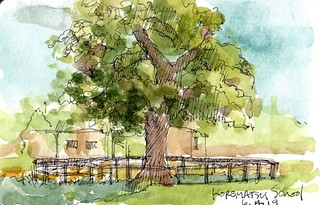 Big Tree at Korematsu