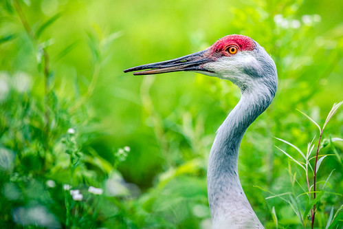 Summer Crane