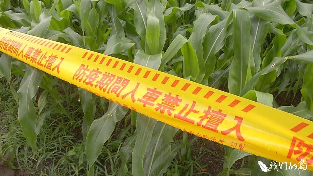 處理後的農田,還需要繼續監測周邊是否有成蟲的蹤跡,三個月後確認沒有蟲跡,才能復耕。