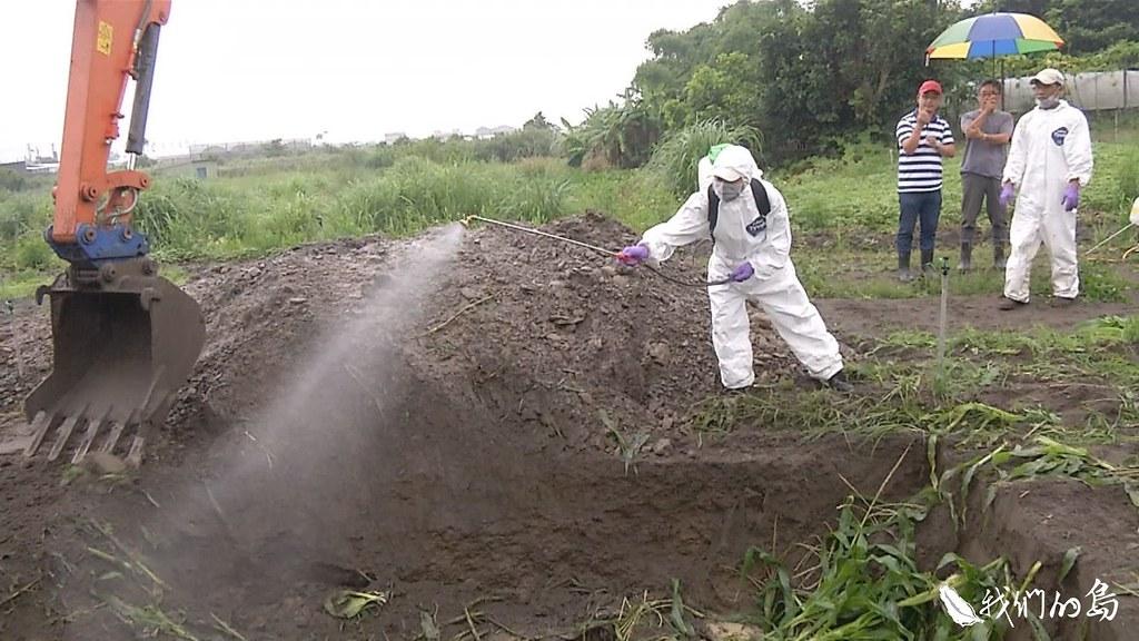 農委會採取殲滅策略,一經確診,即焚燒或掩埋,強制銷毀受感染植株,並撒烏肥或噴灑藥劑。