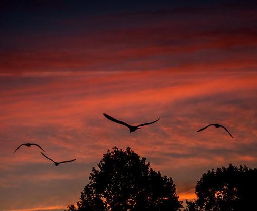 Birds & the sunrise