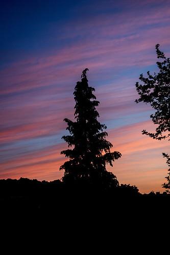 Tree & sunrise