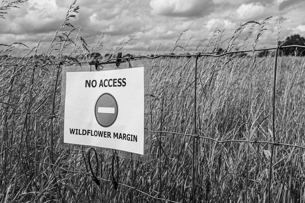 No access, wildflower margin