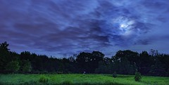 Moon, Meadow, & Lightning Bugs