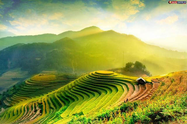Rice fields on terraced of Mu Cang Chai YenBai Vietnam.