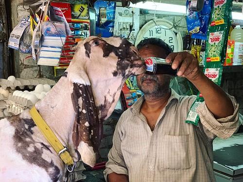 Mission Delhi - Bhoora the Goat, Old Delhi