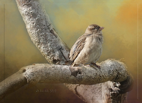 birds wellington bird vogel vögel outdoor outside newzealand sparrow spatz brown braun textures texturen texture textur rahmen frame photoborder nature natur dailytexture jaijohnson animal animals tiere tree trees baum ast branch 012508 coppercloudsilvernsun ngc npc