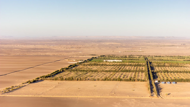 Sekem: Greening the Desert
