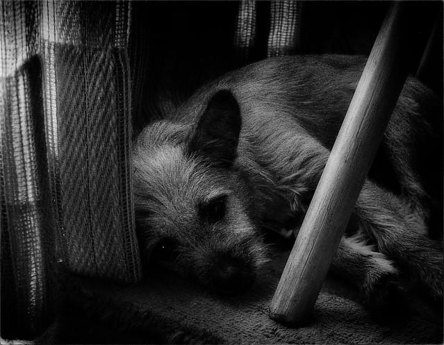 Comfort Under a Chair