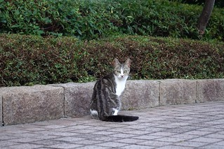 Today's Cat@2019-06-17 | by masatsu