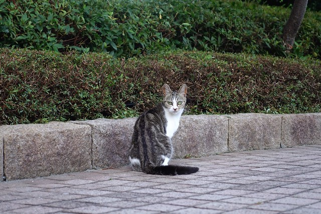 Today's Cat@2019-06-17