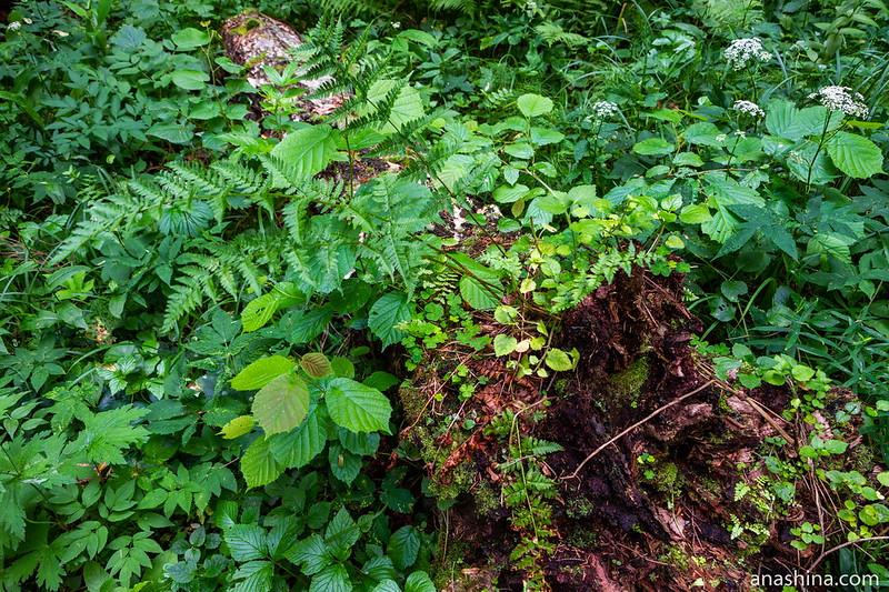 Растения на старом стволе