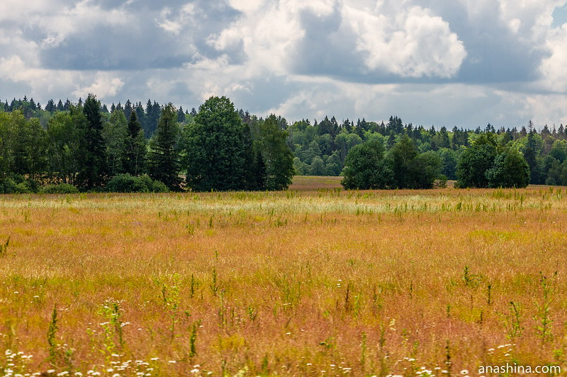 Поле и лес