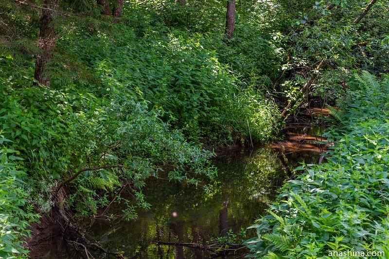 Река Сохна