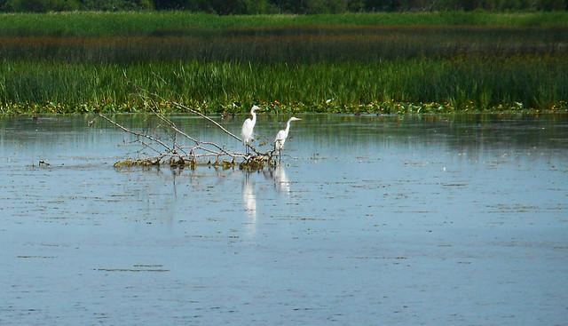 Nemunas delta regional park 02