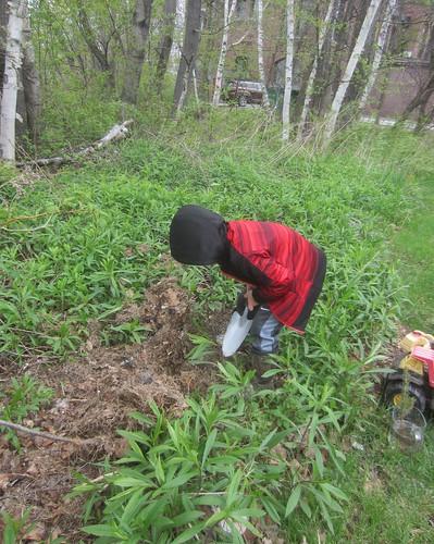 planting his tree