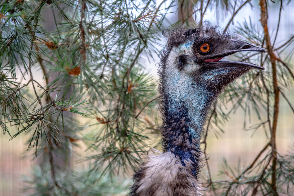 emu_head_new_02