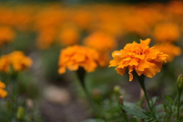 Arca d'Água Garden flowers -II