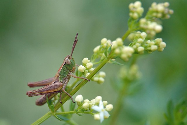 365 - Image 168 - Grasshopper...