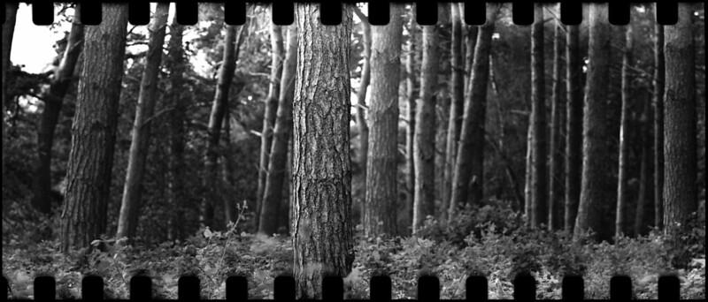 Mamiya 7 35mm film