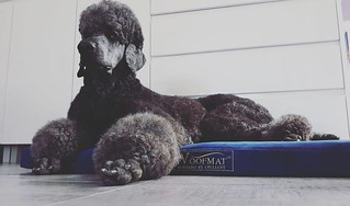 Blue Woofmat - therapeutic pet bed