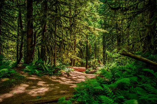 teapothilltrail cultuslake trail mossytrees ferns martinsmith ©martinsmith hiking landscape britishcolumbia canada teapothill shadows
