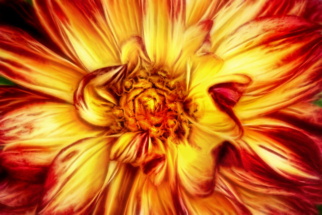 Artistic Dahlia in Multicolors 6-0 F LR 5-8-19 J171