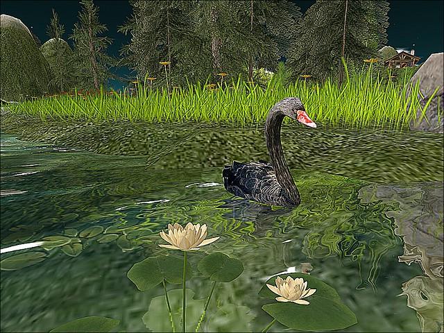 Destinus Essence - Black Swan