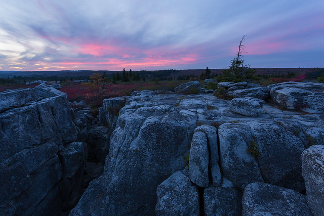Dolly Sods Evening Pinks