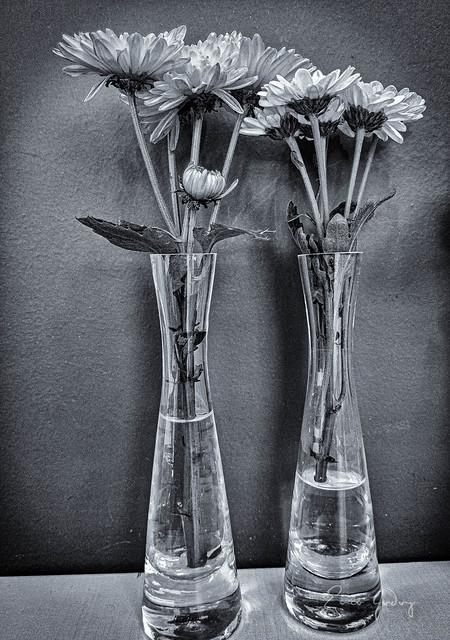 Flowers - duo