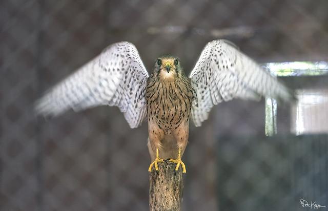 Fastest Bird in the World