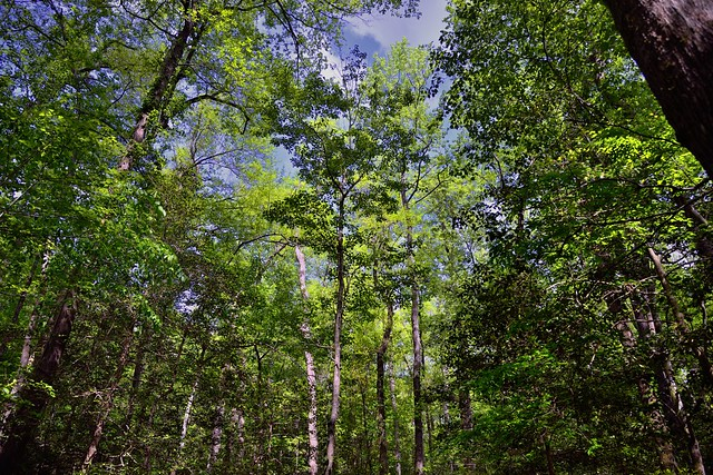 Dancing Under the Trees with the Wind as My Music (Congaree National Park)