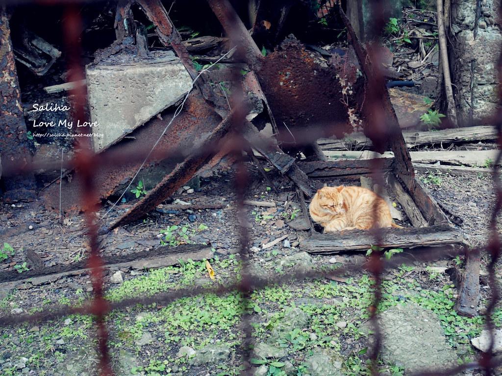 猴硐貓村一日遊景點小吃 (30)