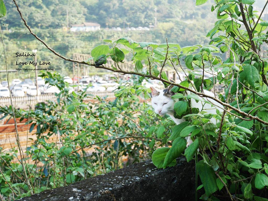猴硐貓村一日遊景點小吃 (9)