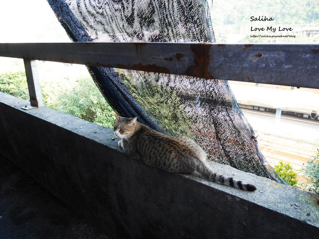 猴硐貓村一日遊景點小吃 (12)