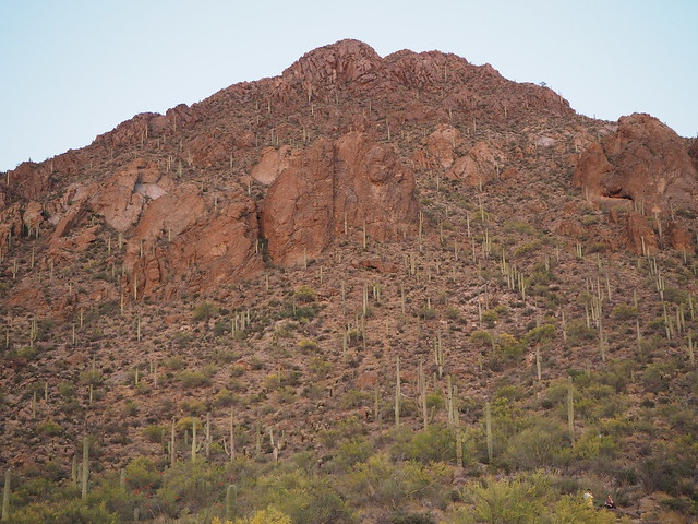 S4273379 west of Tucson sunset look up at saguaro cactus on mountainside Gates Pass Rd