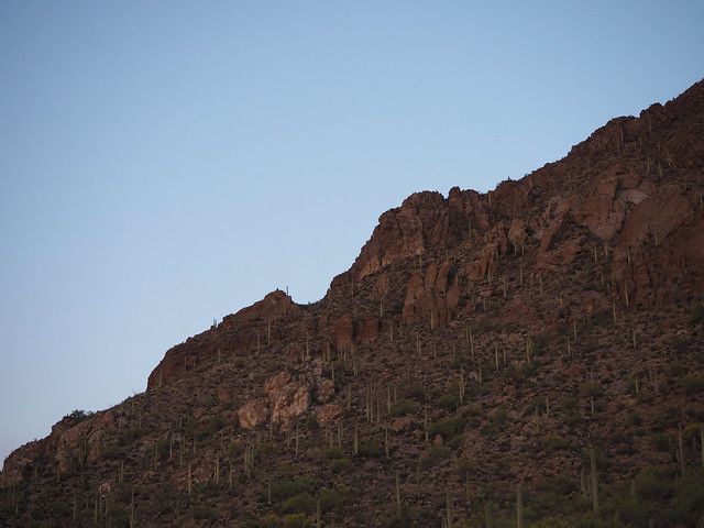 S4273380 west of Tucson sunset look up at saguaro cactus on mountainside Gates Pass Rd