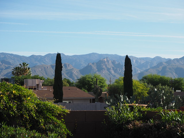 S4283407 morning view across wash to Mt Lemmon from Tucson rental house backyard