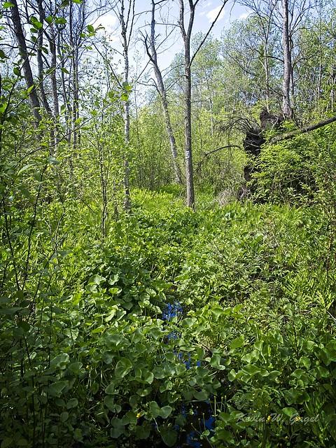 Bare Oaks Family Naturist Park 06