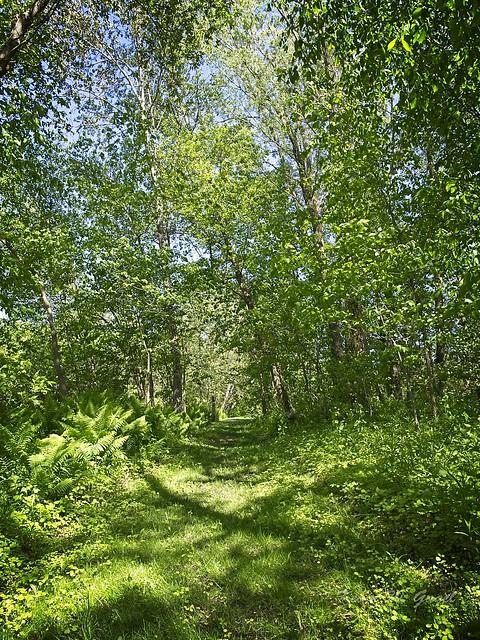 Bare Oaks Family Naturist Park 04