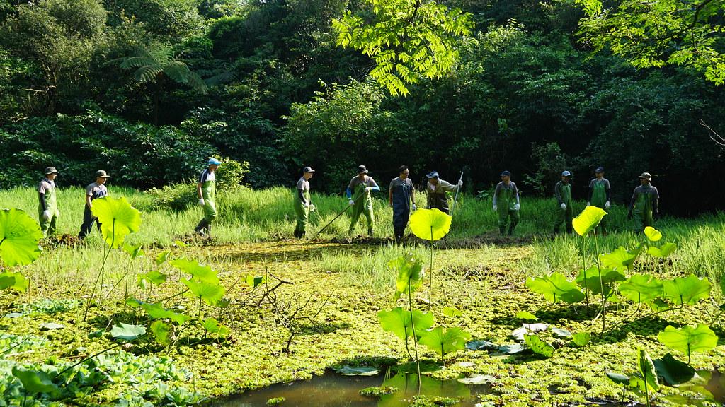 日本「四大電子電器產業協會」成立「生物多樣性工作小組」,將主流化融入工作與生活中。其實台灣也有企業早就具備主流化的思考。圖為Timberland員工擔任企業志工,清除外來種。攝影:黃啟翔