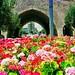 Heraklion in flowers