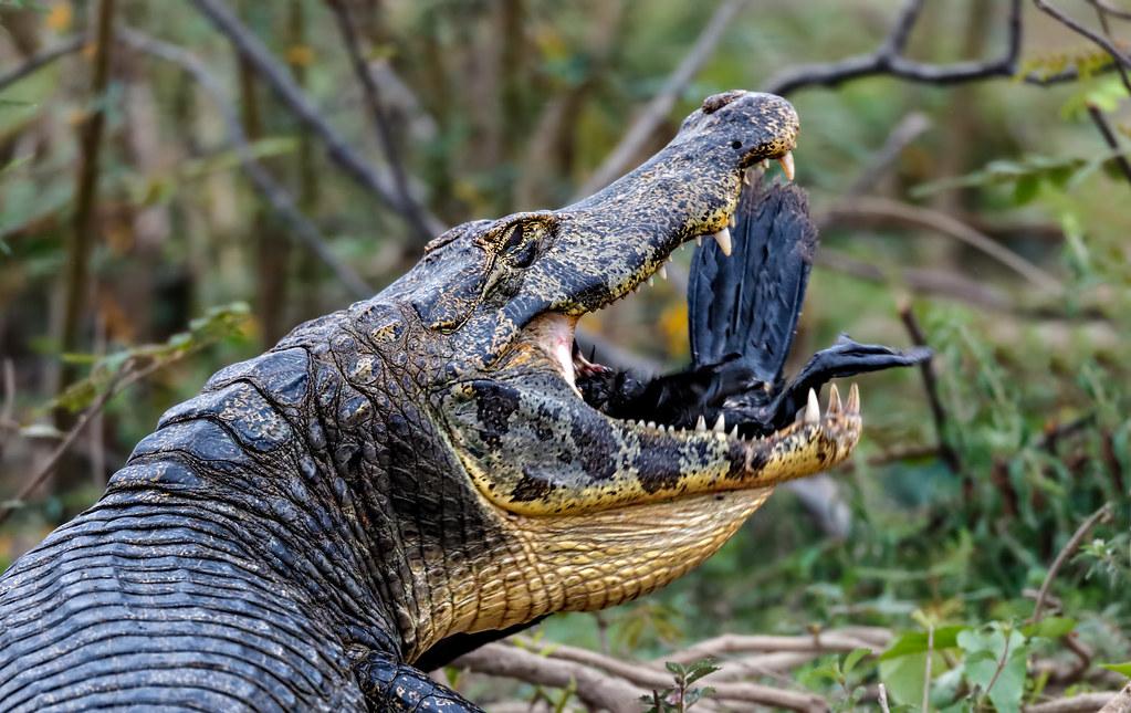 Pantanal_3907
