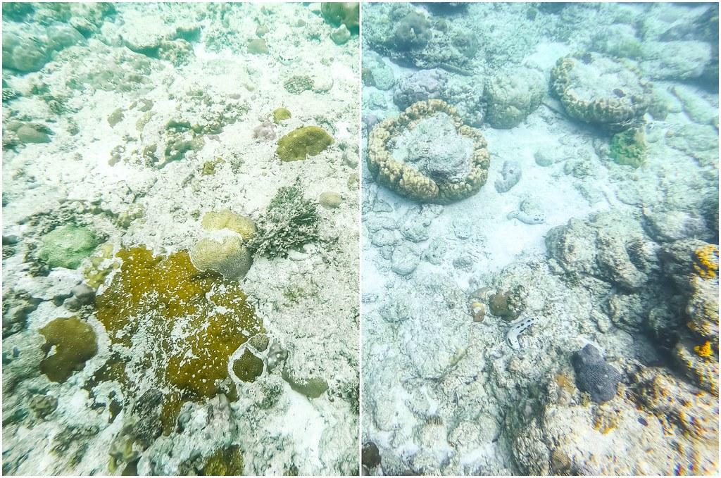 cauayan-island-resort-snorkel-alexisjetsets