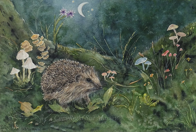 Rummaging Hedgehog.