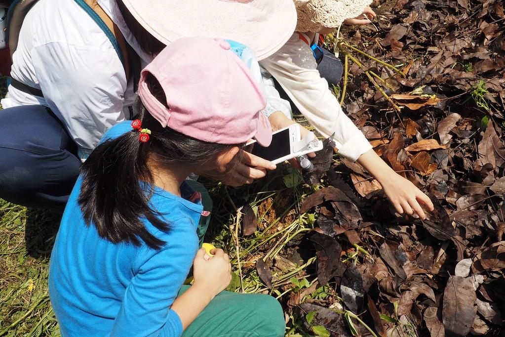 利用手機放大鏡觀察落葉堆中的土壤動物。攝影:李育琴