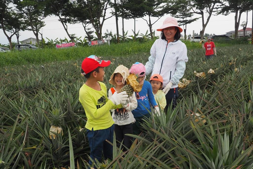 認識土壤動物後,體驗採收有機鳳梨。攝影:李育琴
