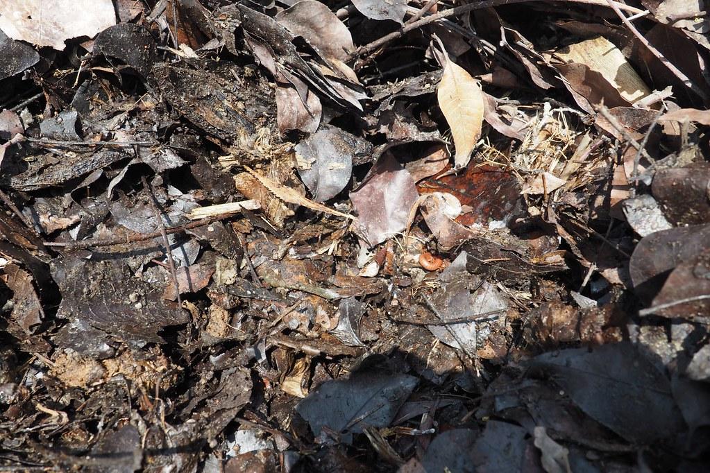 健康的土壤中有數以百萬計的微生物,影響著農作物的營養和風味。攝影:李育琴