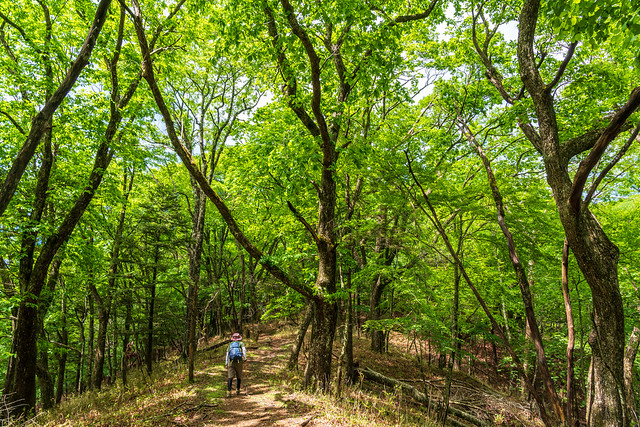 三窪高原への登山道を行く