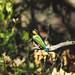 "<p><a href=""https://www.flickr.com/people/137676829@N04/"">-JensGoneNomad</a> posted a photo:</p>  <p><a href=""https://www.flickr.com/photos/137676829@N04/48085483903/"" title=""Exotic Bird""><img src=""https://live.staticflickr.com/65535/48085483903_9b1e56119e_m.jpg"" width=""240"" height=""158"" alt=""Exotic Bird"" /></a></p>  <p>Landscape &amp; Travel Photography</p>"